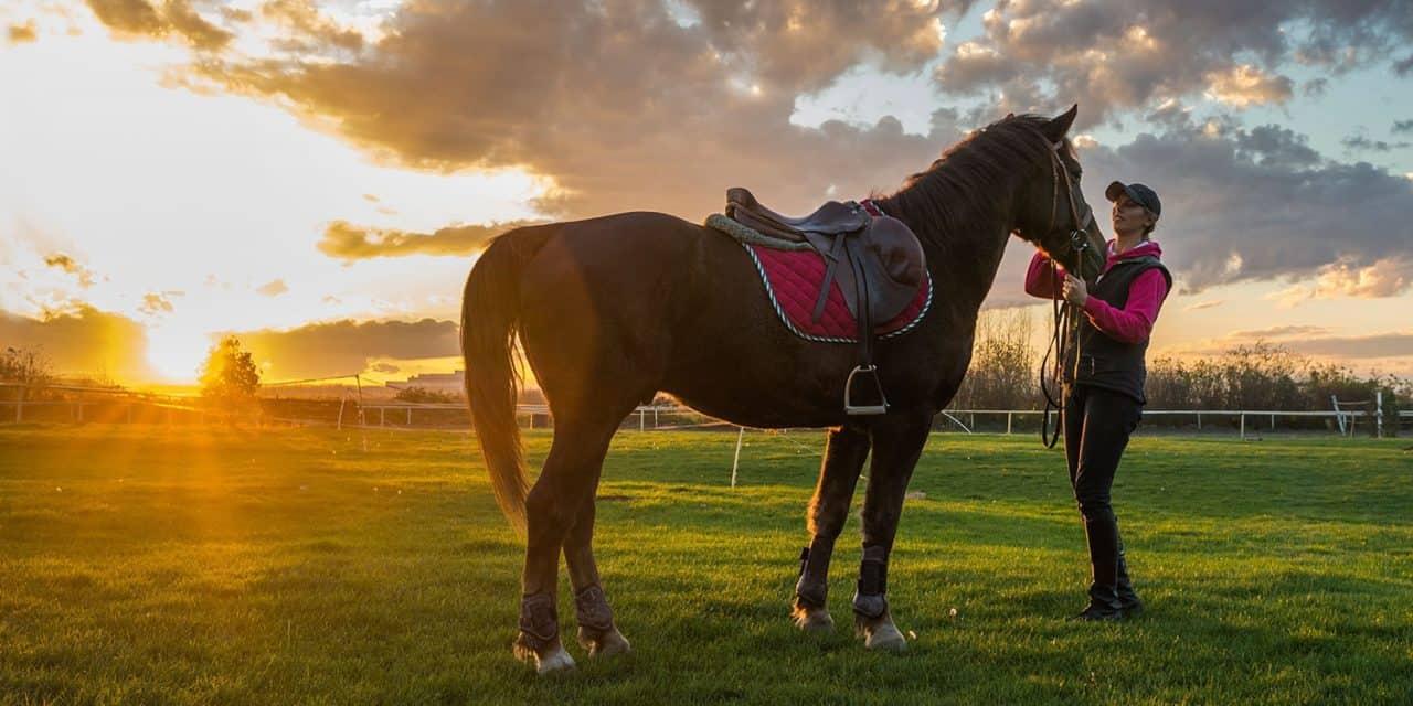 Poll Recap: Achieving the Work-Life-Riding Balance – The Horse
