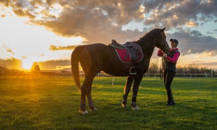 Boarding Archives – The Horse