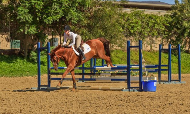 Study: One Toe is Better Than Multiple Toes for Horses