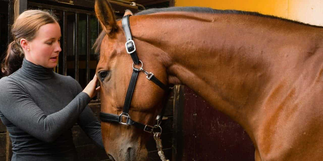 Study: Some Horses, Riders Have 'Co-Being' Relationship