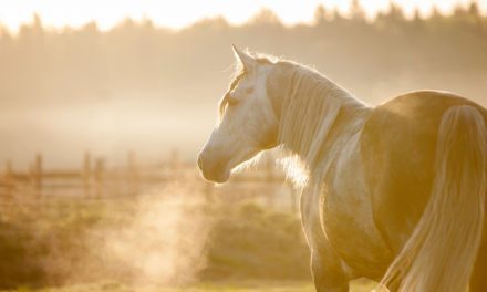 Breathing Easy: Managing Horses with Asthma
