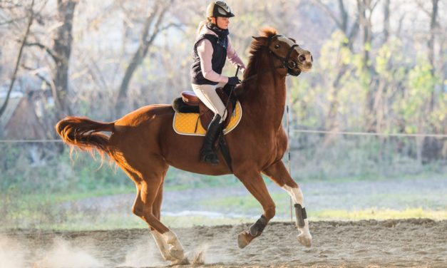 Want a Better-Behaved Horse? Consider Feeding a Low-Starch Diet