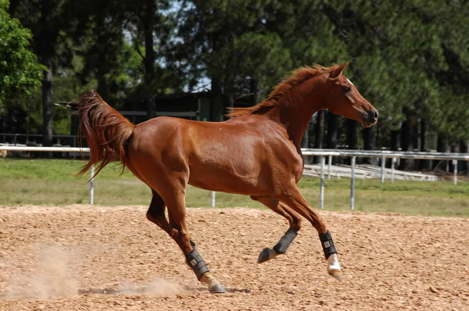 High-Starch Diets' Effects on Stress Response in Horses