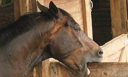 Does Omeprazole Reduce Cribbing in Horses?
