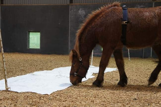 Study Confirms Demonstrator Horses Can Have Calming Effect