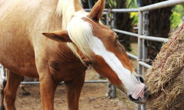 Feeding Evacuated Horses