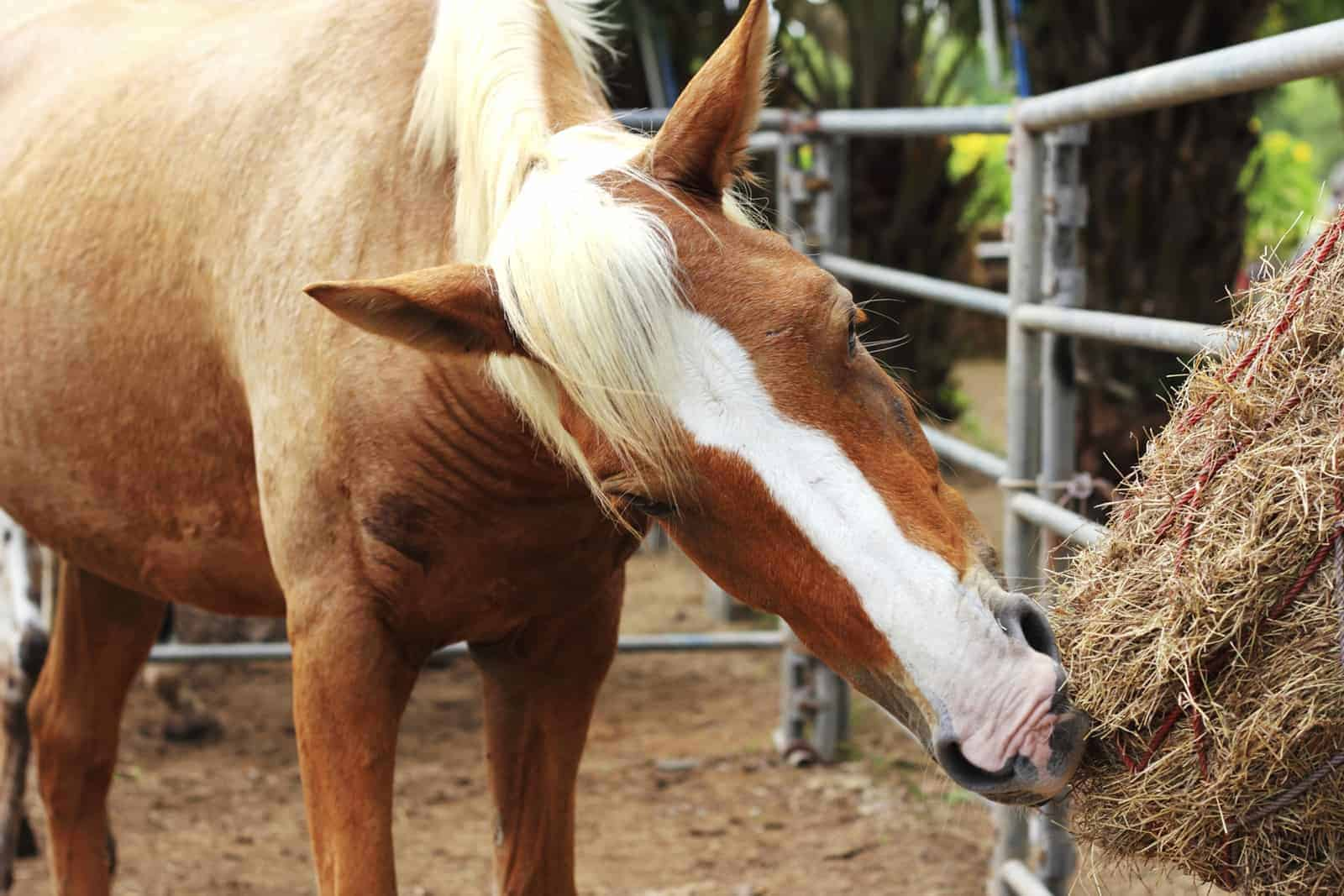 Can Management Help an Ulcer-Prone Horse?
