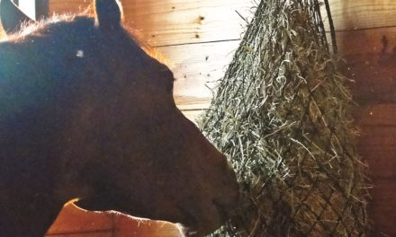 A Recipe for Equine Weight Loss