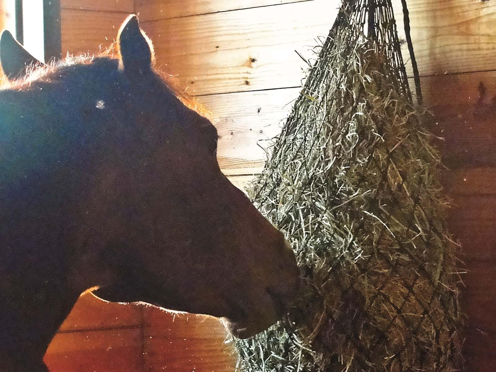 feeding horses on stall rest