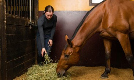 Advice for Feeding Horses With Heaves