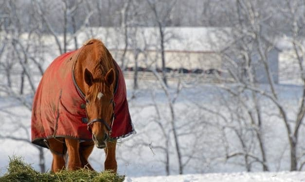 Equine Nutrition New Year's Resolutions
