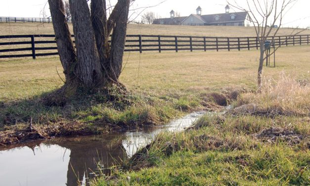 How to Protect Septic Systems and Wells from Horses