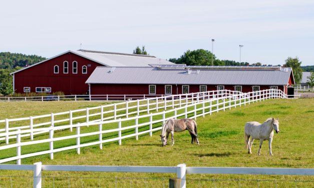 Pasture Management for Year-Round Grazing