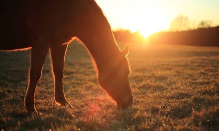 8 Facts About Circadian and Circannual Rhythms in Horses