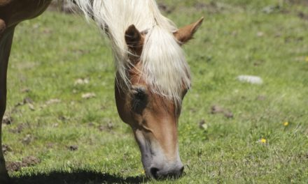 Equine Nutritional Deficiencies: Hair Analysis vs. Bloodwork