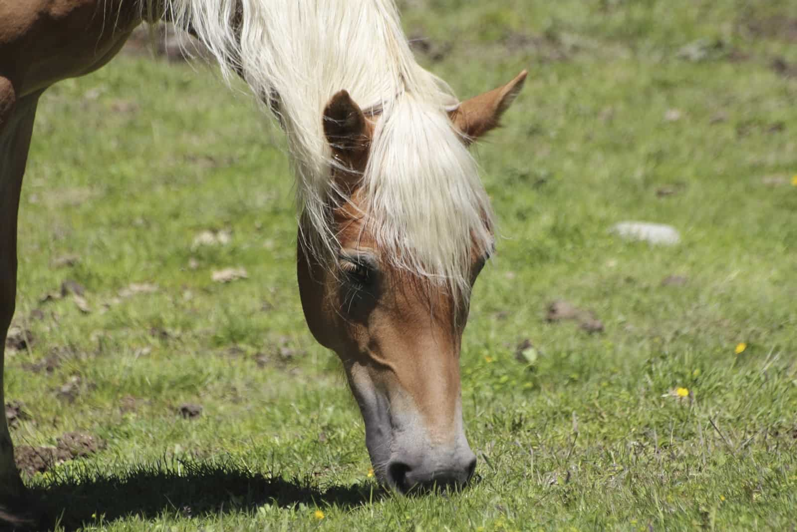 Pasture Management for Parasite Control – The Horse