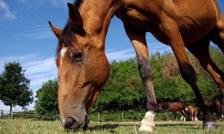 Do Horses Need Vitamin D Supplementation?