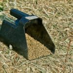 Alfalfa: Are Hay or Pellets Better Before Riding?