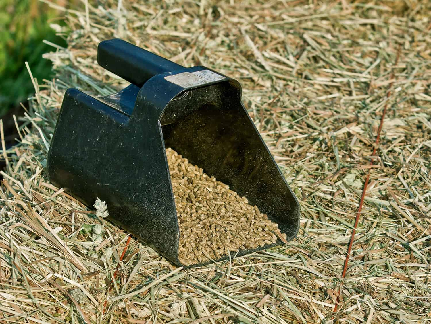 Alfalfa: Are Hay or Pellets Better Before Riding? – The Horse
