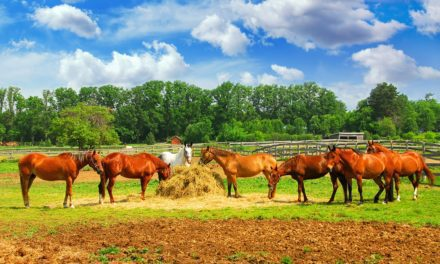 Tips for Feeding Horses in a Group