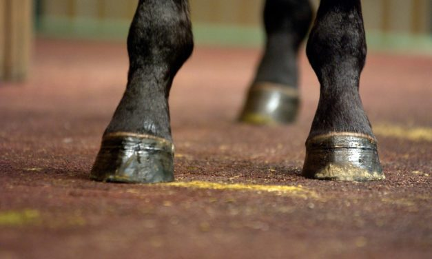 New Navicular Bursa Injection Technique Could Prove Safer