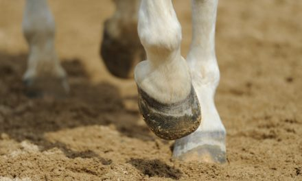 Is There a Cure for Navicular Syndrome?