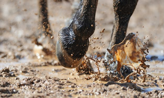 Horse Hoof Stressors