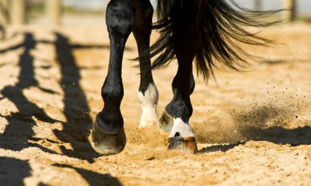 How Does Arena Footing Affect Equine Athlete Longevity?