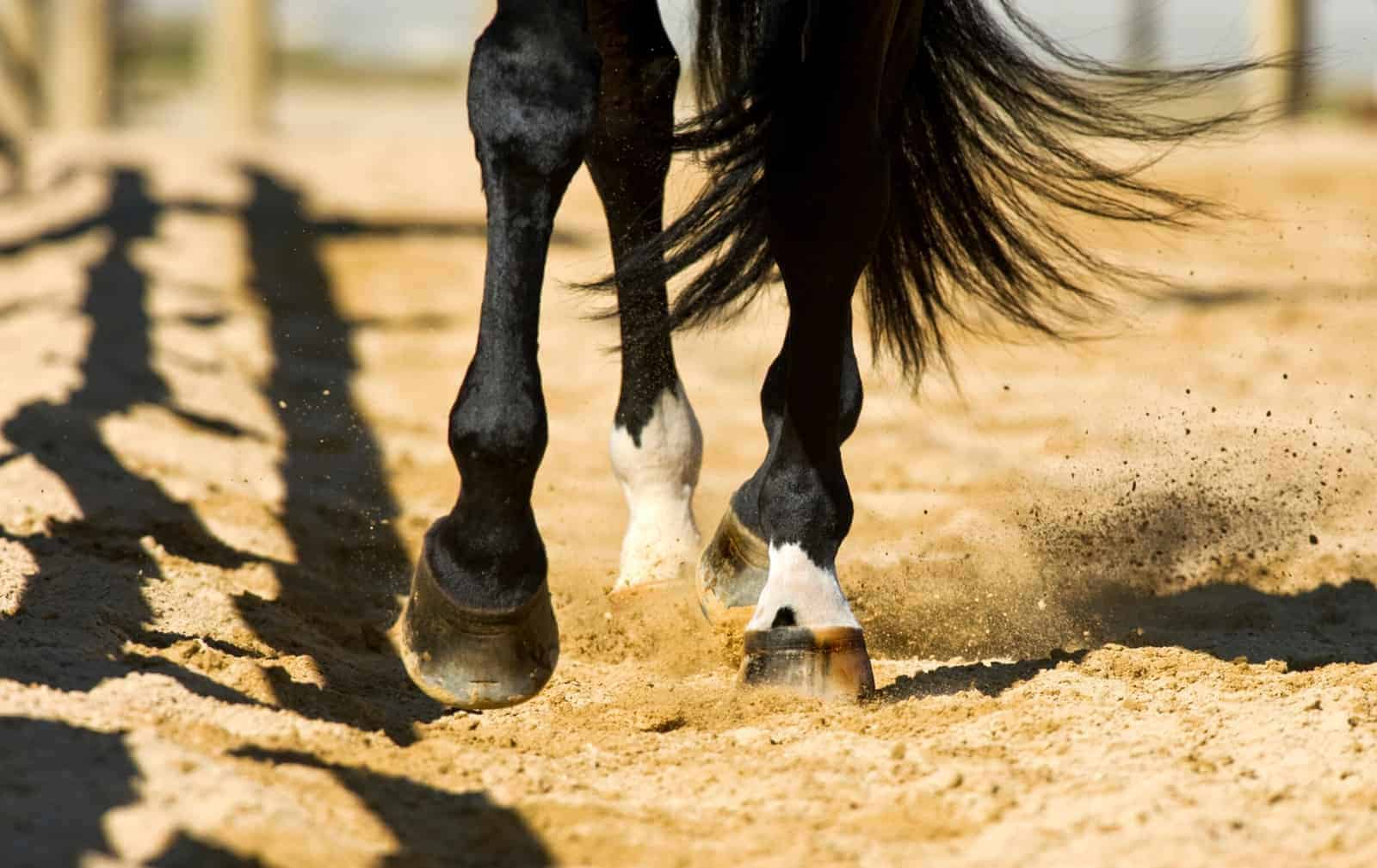 Why Horses Stumble – The Horse