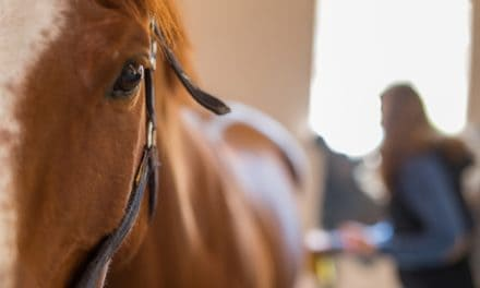 Body Language in Horse and Human Interactions