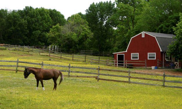 Managing Small Horse Pastures
