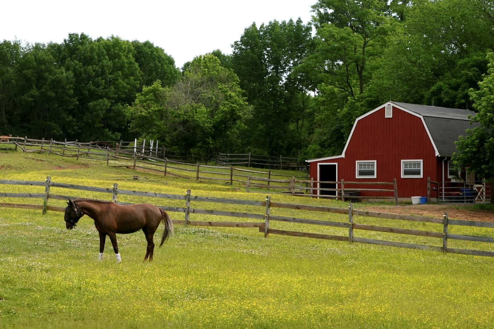 Managing Small Horse Pastures The Horse