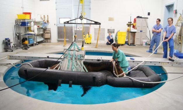 Pool Advances Equine Orthopedic Surgery