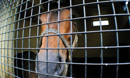 Tips for Handling an Equine Infectious GI Disease Outbreak