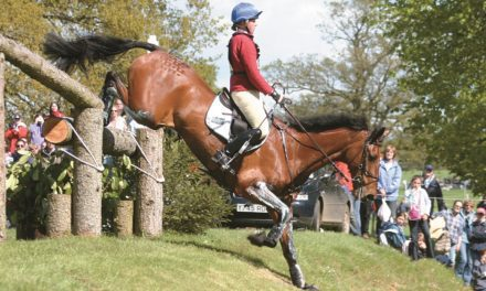 A Review and Update on Tendon and Ligament Injuries in Horses