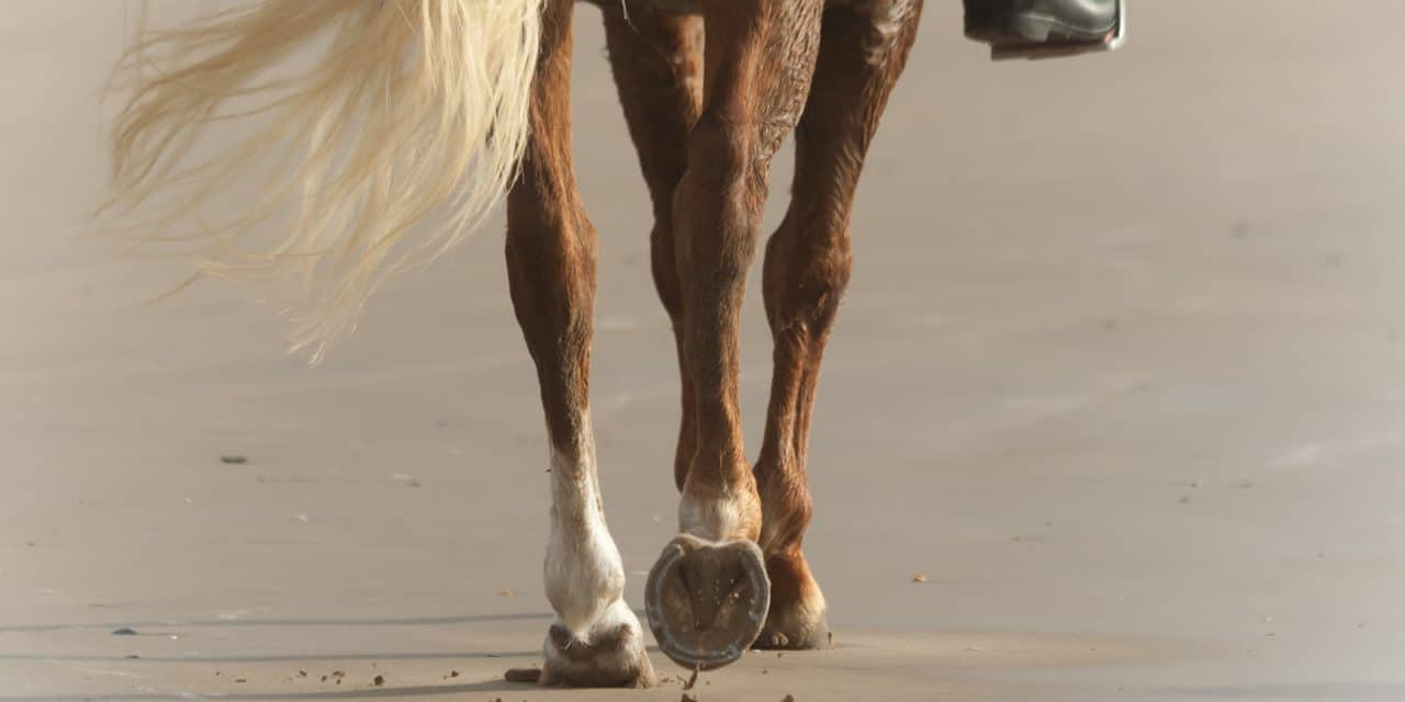 Leg Conformation The Horse