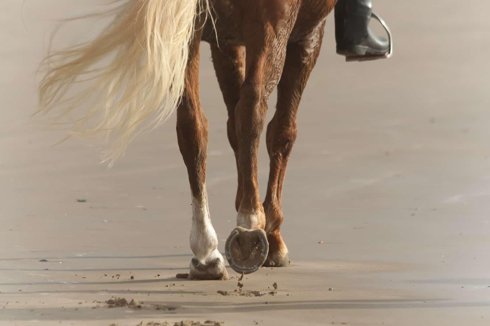 Leg Conformation – The Horse