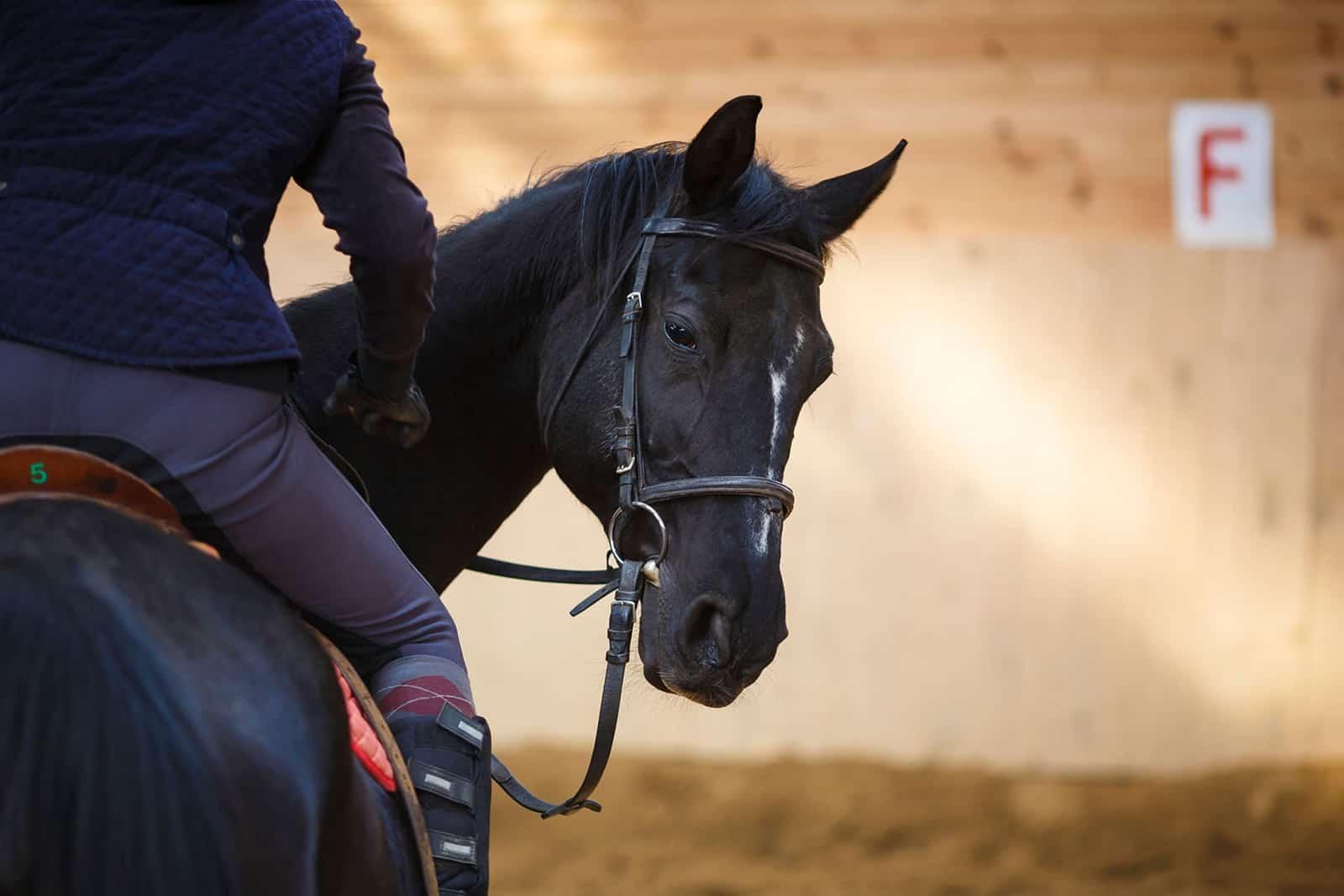 treat-training horses
