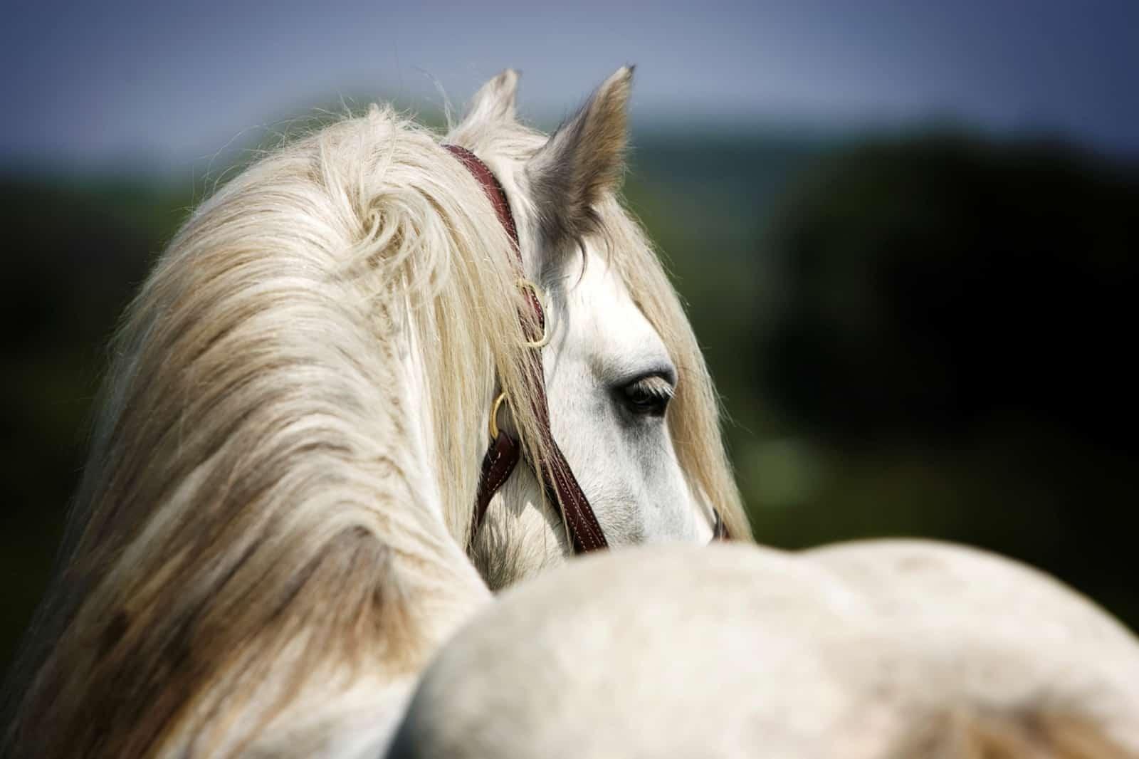 Feeding the Horse's Topline