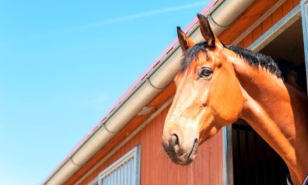 Survey: One-Third of Horses With Health Problems are Lame