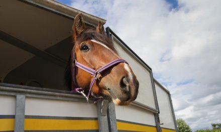 Shipping Horses Long Distances