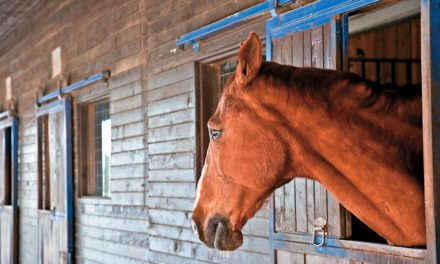 Seeking Relief: Current Directions in Equine Pain Management