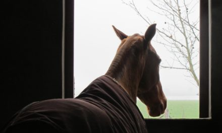 Reining In Equine Infectious Respiratory Diseases