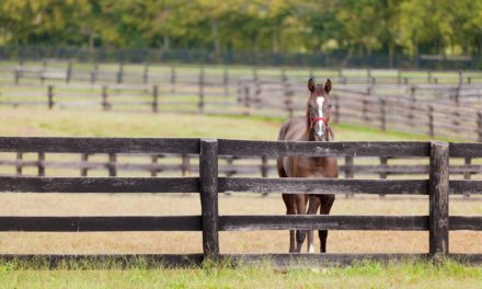 Setting Goals for Managing Your Horse Property