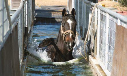 Measuring Horses' Skin Temperature Changes Underwater