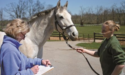 Survey: Owners Consider Vets Important in Horse Health Care