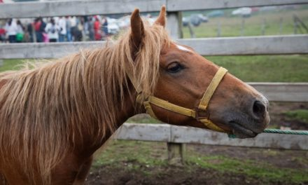 Scared Horse? Try Counter-Conditioning
