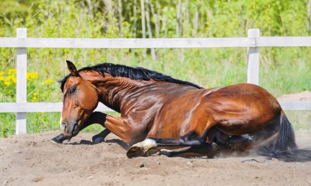 Fasting Horses Reduces Gut Microbiota Number, Diversity
