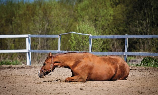 10 Colic Preparedness Questions to Ask Yourself