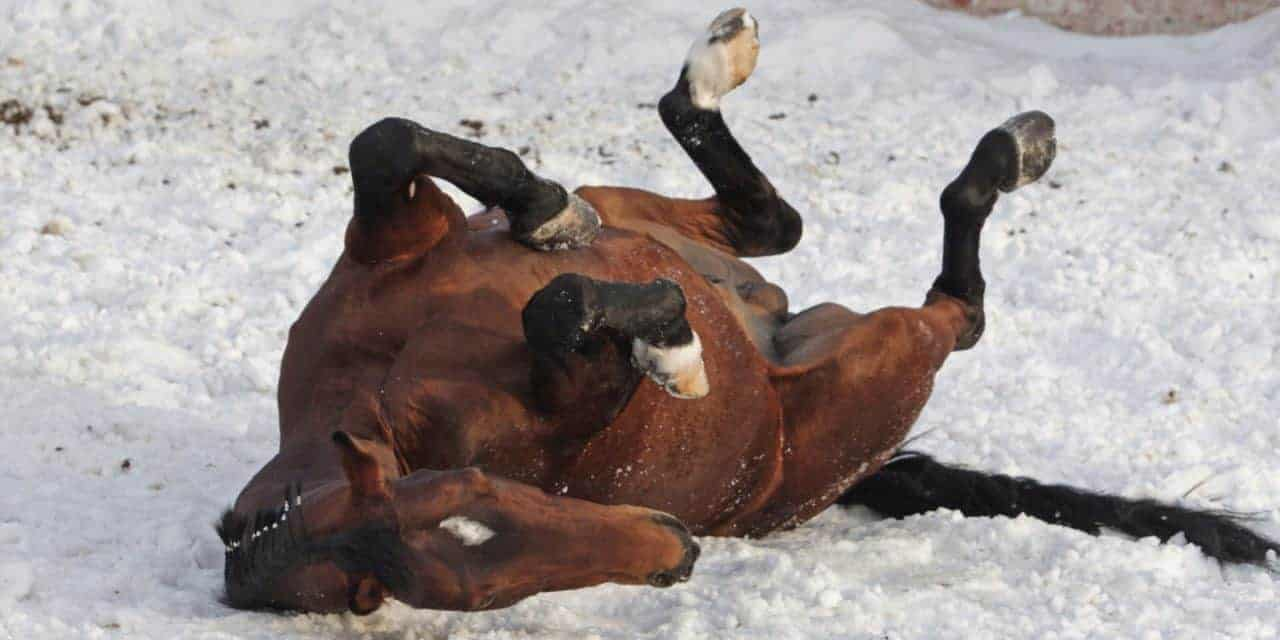 Cold Weather Horse Colic